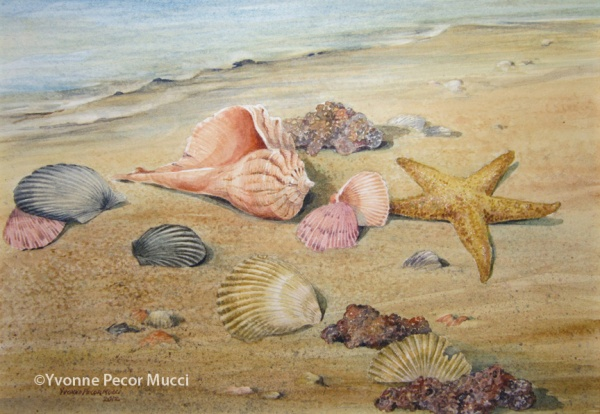 Seashells by Yvonne Pecor Mucci