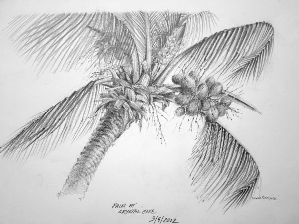 Trade Winds Palm Tree by Yvonne Pecor Mucci