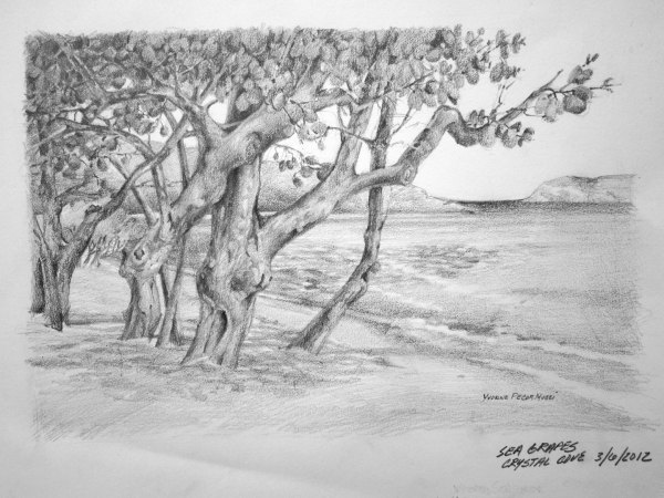 Sea Grape Trees at Sapphire Bay by Yvonne Pecor Mucci