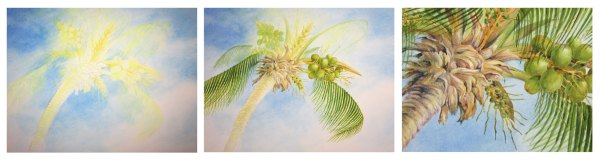 Palm tree watercolor study by Yvonne Pecor Mucci