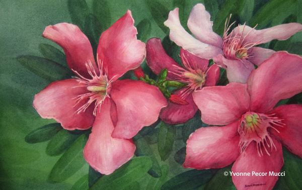 Pink Oleanders Watercolor by Yvonne Pecor Mucci