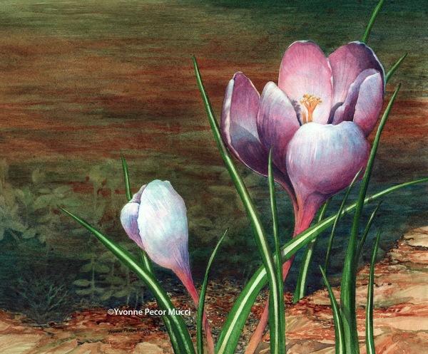 Spring Crocus (Framed 20 x 16) by Yvonne Pecor Mucci