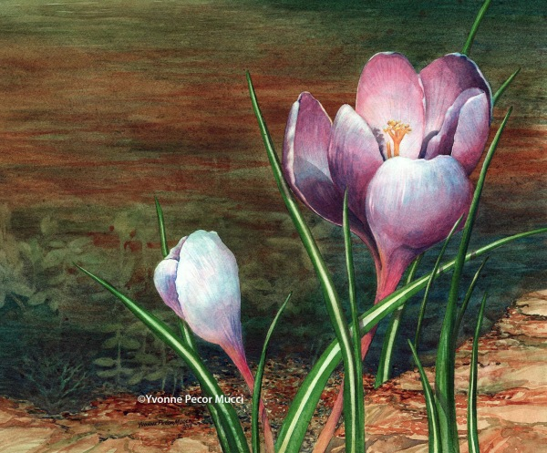 Spring Crocus (Framed 20 x 16) by Yvonne Pecor Mucci