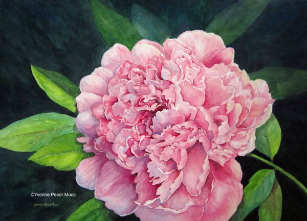 Love Blooms – Pink Peony (Framed 18 x 24) Watercolor by Yvonne Pecor Mucci