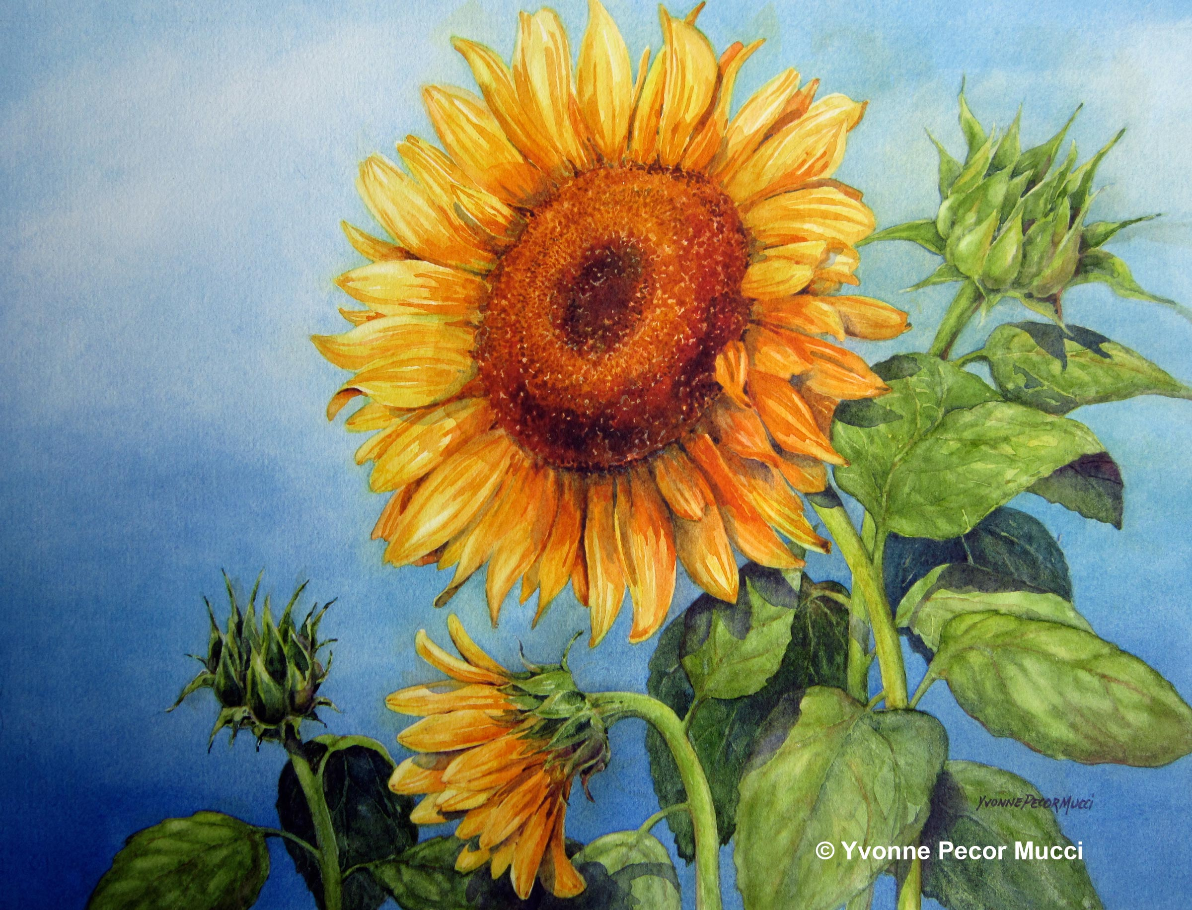 Image Gallery sunflowers watercolor