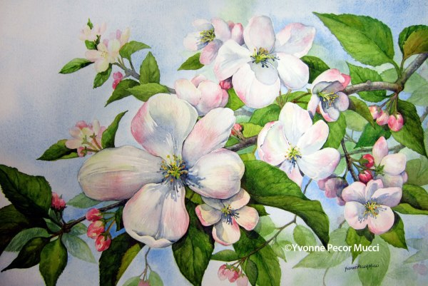Apple Blossoms Watercolor by Yvonne Pecor Mucci (Framed 24 x 16)