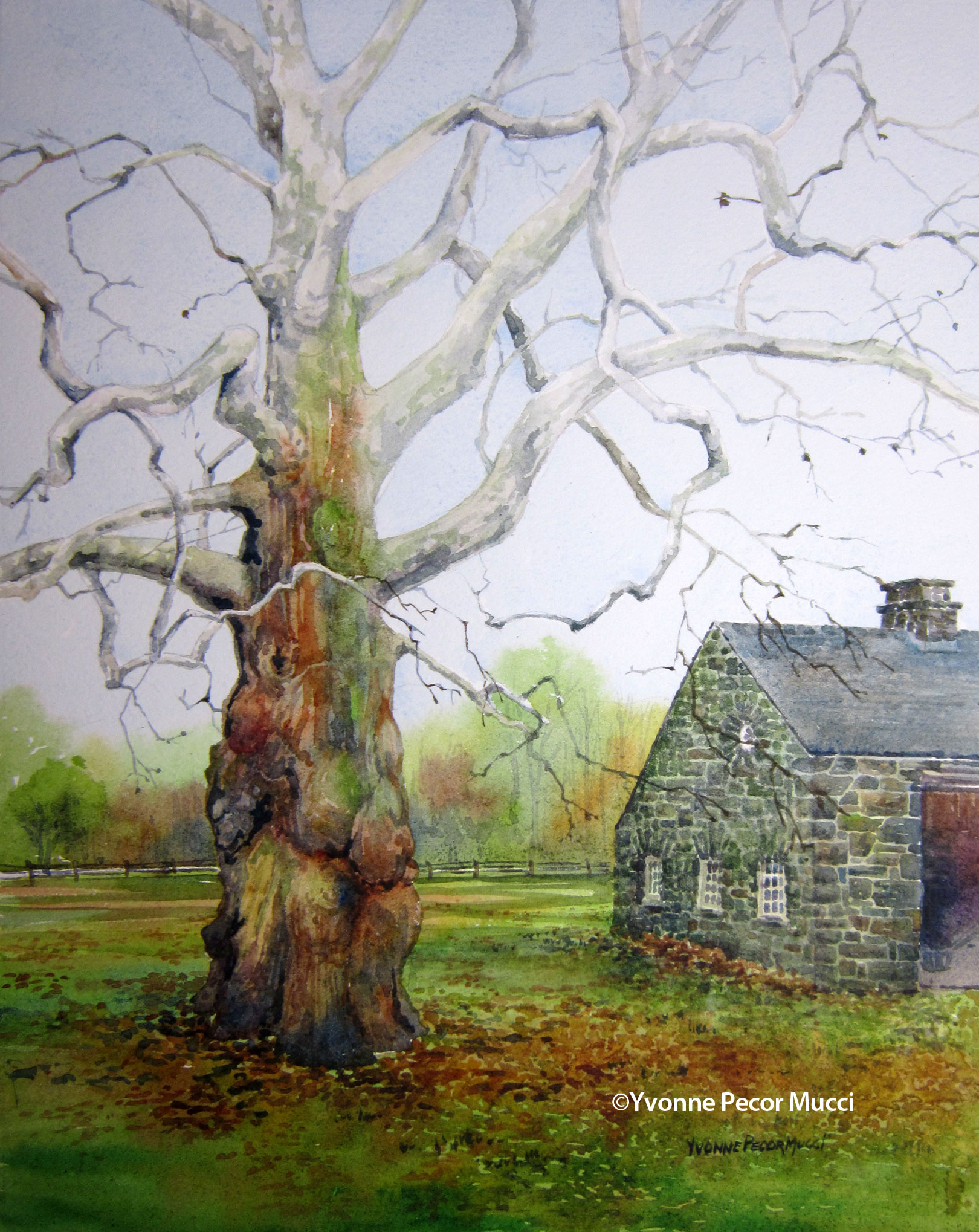 Where The Sycamore Grows watercolor by Yvonne Pecor Mucci (Framed 16 x 20, Available)