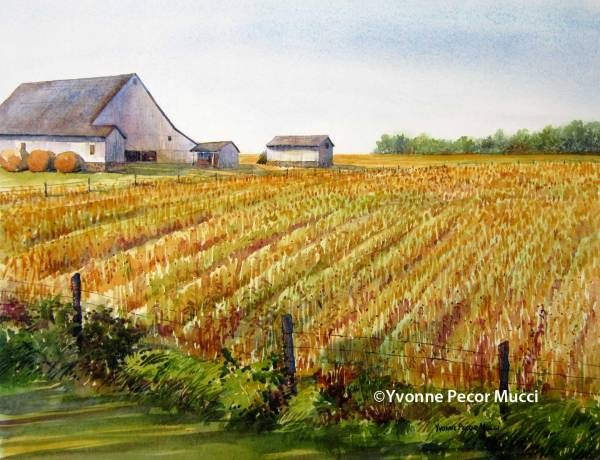 Grain Fields watercolor by Yvonne Pecor Mucci  (Framed 24 x 20, Inquiries to mucciyvonne@yahoo.com)