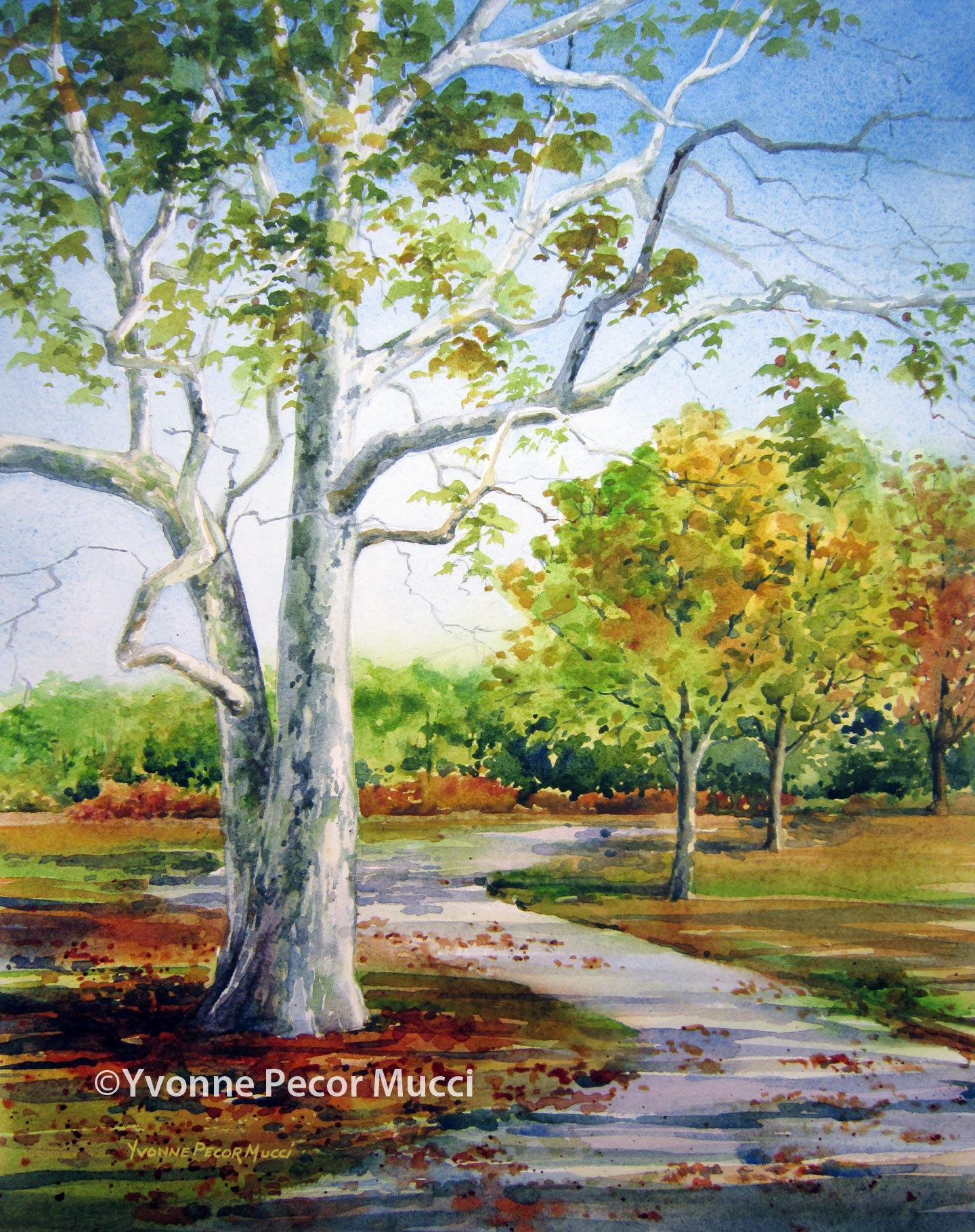 Sycamore Walk watercolor by Yvonne Pecor Mucci (Framed 16 x 20, Available)