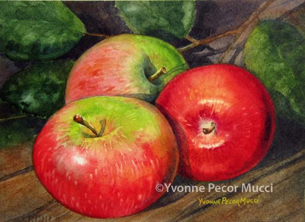 Take A Bite watercolor by Yvonne Pecor Mucci